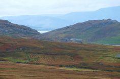 The Achill Terroir, free range home to the premium Achill Blackface Lamb. Photo by Free Range, Lamb, Mountains, Nature, Travel, Naturaleza, Viajes, Destinations, Traveling