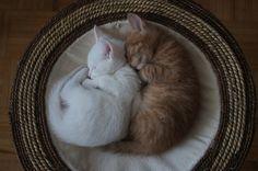 kitty cuddle