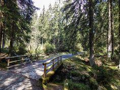 Auf dem Weg zum Brocken im Harz. Hier: Die Moosbrücke bei Braunlage/Torfhaus. www.treat-of-freedom.de Abenteuer * Individualreisen * Bushcraft * Outdoor * Natur