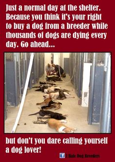 """Shelter animals need homes more than breeders need your money.  Lets stop bringing more """"pets"""" into the world while so many (who are already here) suffer and die."""