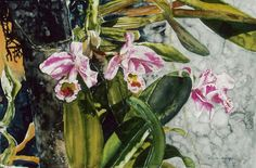 "orchid st kitts 16"" x 22"" micheal zarowsky / watercolour on arches paper available $1000.00"