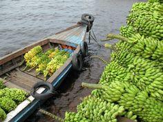 Bananen , surinaamse trots.