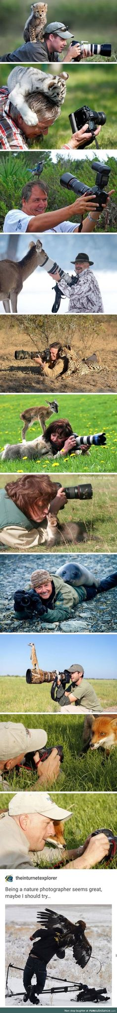 Online Photography Jobs - This is why I don't open iFunny in public Photography Jobs Online Funny Animal Memes, Cute Funny Animals, Funny Animal Pictures, Cute Baby Animals, Funny Cute, Animals And Pets, Funny Memes, Hilarious, Nature Animals