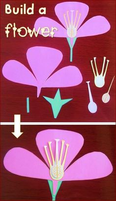 Parts of a Flower Activities $ #science