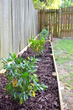 gardenia garden beds