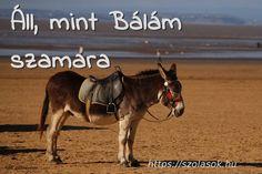 Áll mint Bálám szamara Samara, Bali, Horses, Urban, Animals, Animales, Animaux, Animal, Animais