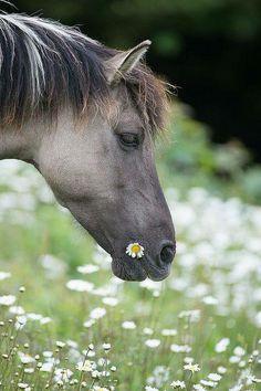 horse in Daisy field....