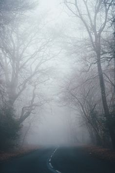 38 Ideas For Dark Autumn Photography Mists Misty Forest, Dark Forest, Fog Images, Fog Photography, Landscape Photography, Forest Pictures, Dark Autumn, Autumn Cozy, Bare Tree