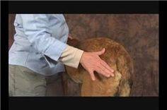 Video: Dog Massage for Hip Dysplasia: Sacrum