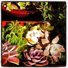 🍃I found this little guy in my succulent garden 🍄 😉