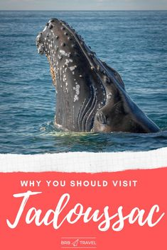 Why you should visit Tadoussac? 2 main reason: Whale watching and beautiful scenery. This guide gives you the best things to in Tadoussac. #canada #whalewatching #quebec
