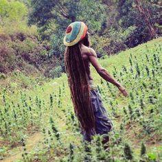 Cannabis Cultivation, Jamaica Travel, Marijuana Plants, Cannabis Growing, High Society, Medicinal Herbs, Smoking Weed, Bob Marley, Reggae