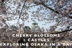 Cherry Blossoms + Ca