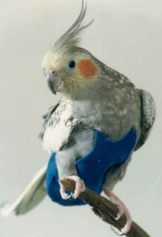 FlightSuits Reusable Bird Diaper: No more mess when you take your pet bird outside the cage! Available for $20.99.