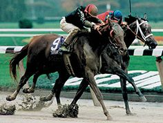 Champion My Flag (by Easy Goer and Personal Ensign) dies after foaling a Bernardini foal at Claiborne Farm.