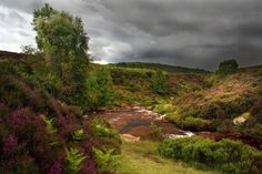 North Yorkshire Moors-love the colours
