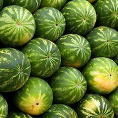 Watermelon is a fruit that grows on a vine-like flowering plant native to Southern Africa. Now, watermelon is full-grown round the world, and in forty four of the fifty states in America. Types Of Watermelon, Watermelon Benefits, Watermelon Nutrition Facts, Nutrition Quotes, Nutrition Classes, Health And Nutrition, Health Fitness, Vitamin A, Healthy Environment
