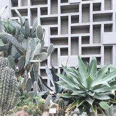 Die 115 Besten Bilder Von Pflanzen Plants