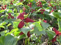 Larken Bunce is a clinical herbalist, educator, writer, gardener and photographer.