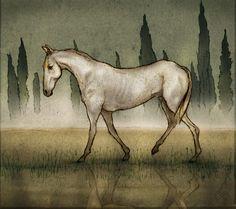Finn Campbell Notman foliart.co.uk/finncampbellnotman #illustration #horse