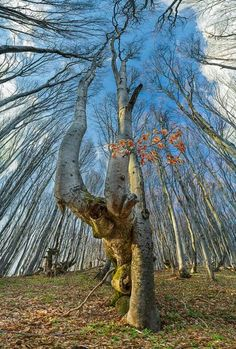 Trees-- beautiful with or without foliage. And so vital to our Earth. #mywatergallery