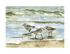 Birds on the Beach, Pen and Ink Watercolor Drawing at Shoreline, Surf, Ocean, Waves, Water, Sea Green, Sea Foam Blue, Art Print. $15.00, via Etsy.