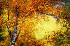 Photo Fall Light 3 by Ursula Abresch on 500px