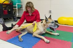 PT for pets? Vets prescribing physical therapy - The Washington Post