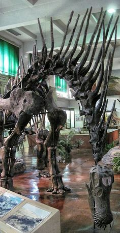 """Amargasaurus """"La Amarga lizard"""" is a genus of sauropod dinosaur from the Early Cretaceous epoch mya) of what is now Argentin."""
