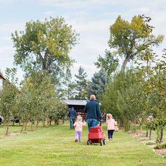 4 Ottawa Apple Orchards We Love | U-pick apple orchards we love in Ottawa
