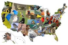 US States:  ideas for state reports (of all kinds) -State-Birds-Map