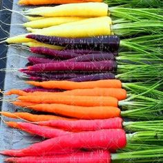 500PCS Carrot Seeds Organic Heirloom Seeds Sweet And Healthy Vegetables Seeds Potted Plant For Home Garden