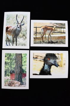 Wildlife Animal Photo Cards Set of 20 Wildlife by MitchiesGalleria