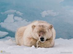 National+Geographic+Amazing+Animals | Cool Animals Photography from National Geographic national-geographic ...