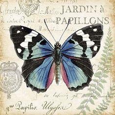 Butterfly Histoire Naturelle II 18x18: Butterflies Butterflyart, Art Publishing, Art License, Brooks Art, Art Prints, Art Company, Gift Marketing, Wholesale Art, Decor Art