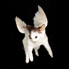 Sweet little kitty is an angel now...