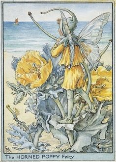 The Horned-Poppy Fairy' by Cicely Mary Barker