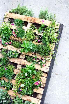 Vertikaler Garten für Balkon und Terrasse: Aus einer Euro-Palette und viel blühendem Grün. #upcycling #urbangardening  gesehen bei www.avogel.de/blog   © Greenrabbit.co