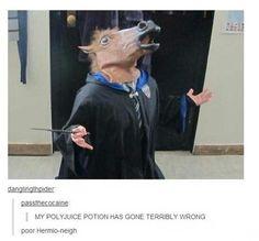 Horse heads in Hogwarts