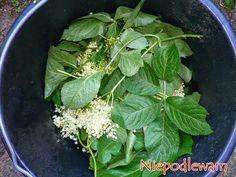 Spinach, Vegetable Garden, Vegetables, Plants, Gardening, Living Room, Garten, Pillows, Vegetables Garden