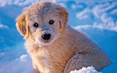 Pupply loving winter time