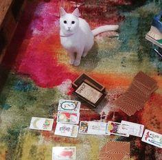 Kedimiz Merlin eşliğinde  tarot , katina, aşk ,yıldız falı, doğum haritası, rüya yorumu, ilişki yorumu, dert ortağı www.tarotname.com 'da cat merlin tarot site
