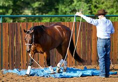 Teaching your horse how to cross over a tarp gets him used to stepping onto an object that moves and makes a noise. Anytime your horse will respect and trust you to move over something that moves and makes a noise, its a great sign that hes using the thinking side of his brain.