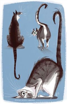 The wonderful illustrations of Steph Laberis. - The wonderful illustrations of Steph Laberis. Cat Character, Character Design References, Character Sketches, Funny Drawings, Animal Drawings, Expression Face, Gatos Cats, Cat Photography, Cat Wallpaper