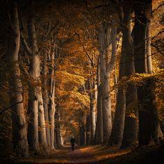 Autumn walk by Northstar76.deviantart.com on @DeviantArt