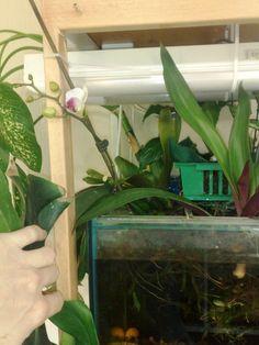 Наш опыт аквапоники - Все о комнатных растениях на flowersweb.info