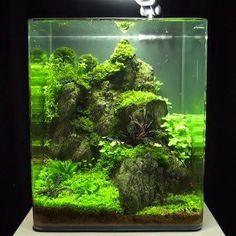 nano aquascaping