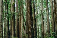 Tree, woodland, green and bark HD photo by Dan Gold ( on Unsplash Free Stock Photos, Royalty Free Photos, Hd Photos, Cool Photos, Essential Oils For Sleep, Best Trade, Graphic Wallpaper, Crescent City, Photo Tree