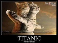 Cute I wander if any one on the ship lived because cats hate water