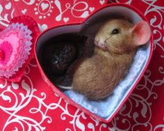 Needle Felted Valentine's Day Chocolate Candy Heart Mouse by Artist Andreae
